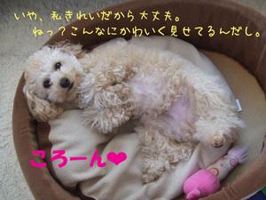 Photo_254