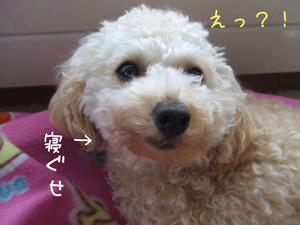 Photo_267