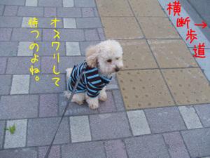Photo_315